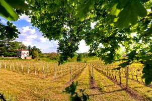 wineyard wedding and tours lucca wedding and tourism tania pracchia